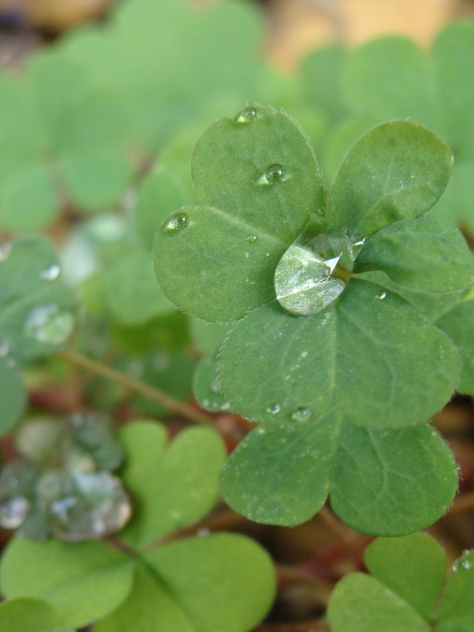 Clover Droplets