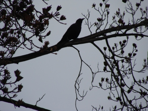 The Lone Crow