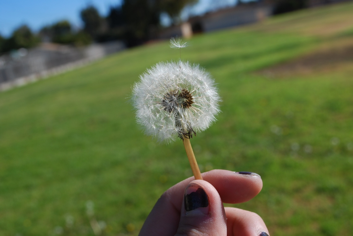 Dandelion Breeze