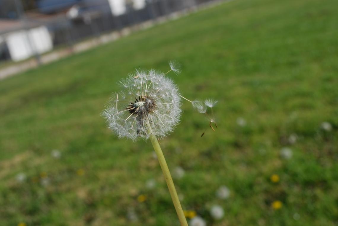 Seed Breeze