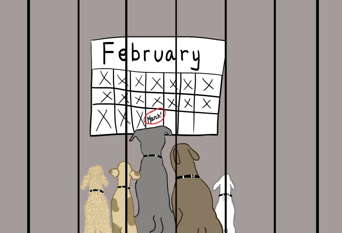3.3.17 Pets Cartoon