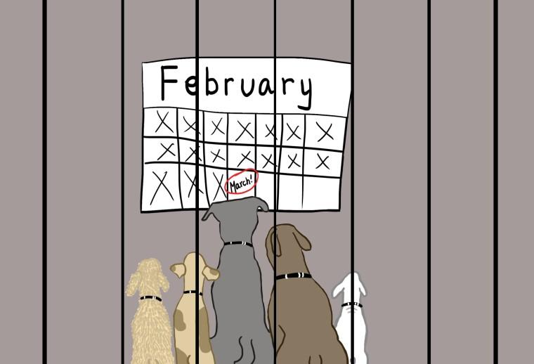 3.3.17 Pets Cartoon